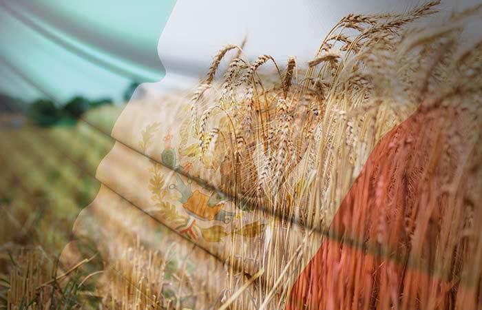 Por primera vez, Argentina exportará trigo pan a México