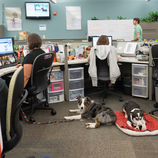 Cultura laboral pet-friendly