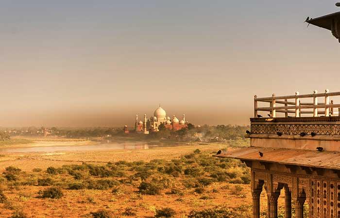 India y sus 50 millones de árboles