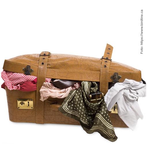 Seis tips para empacar la maleta perfecta.